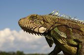 A Closeup Of A Colorful Iguana That Looks Like Its Smiling For The Camera In Amazonia