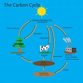 picture of photosynthesis  - The Carbon Cycle showing how carbon is recycled in the environment - JPG