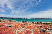 Beautiful landscape of Galapagos South Plaza island