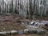 Winter Ice-storm - December