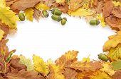 Autumn Oak Leaves And Acorns Border