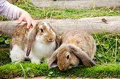 Child And Rabbits