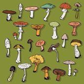 image of morchella mushrooms  - Set of linear drawing mushrooms - JPG