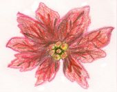 Poinsettia sketch