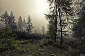 A Mystical Forest With Fog And Shining Behind Trees