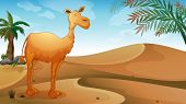 Illustration of a desert with a lonely camel