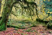 Moss Covered Trees In Rainforest