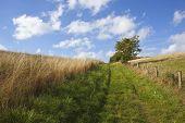 Grassy Bridleway