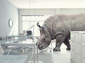 3d modern office and rhino
