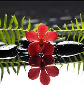 red orchid with fern on therapy stones reflection