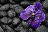 Purple orchid flower and stones in water drops