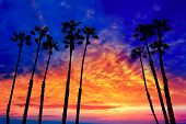 California palm trees group sunset with colorful sky