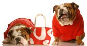 Two Bulldogs In Red With Purse