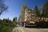 pic of logging truck  - Truck with timber in the forest - JPG