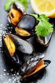 stock photo of sult  - group of boiled mussels in shells - JPG