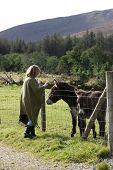 Tourist At A Farm Taking Photo Of Donkeys