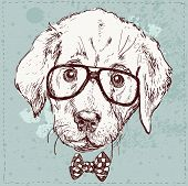 Cute Fashion Hipster Animals Pets, Set Of Vector Icons