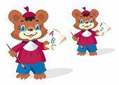 Funny bear pupil