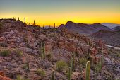 picture of ocotillo  - sunrise in the sonoran desert - JPG