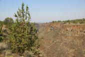 Desert Trees And Basalt Cliffs