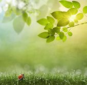 picture of photosynthesis  - Spring or summer season abstract nature background with grass and blue sky in the back  - JPG