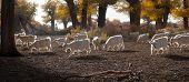 Populus Flock