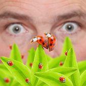 pic of voyeur  - Shocked farmer that looking to mating bugs on his vegetables - JPG