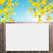 Postcard With Fresh Spring Flowers Forsythia And Empty  Place For Your Text