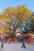 Shrine In A Tree - Durbar Square, Kathmandu