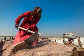 SAMBHAR, INDIA - NOVEMBER 19, 2012: Women mining salt at lake Sambhar, Rajasthan, India. Sambhar Sal