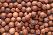 Santalum album  (Indian sandalwood) seed