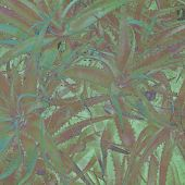 textured old paper background with aloe vera plant