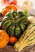Autumn still life of pumpkins