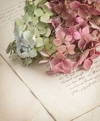 Old Love Letters And Garden Flowers