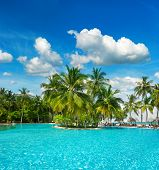 Swimming Pool With Palm Trees And Blue Sky