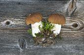 Two Fresh Cep Boletus Mushroom On Wooden Bacground