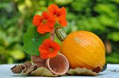 picture of nasturtium  - nasturtium and pumpkin with small flower pot and dry leaves - JPG