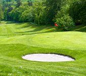 Golf Field. Green Grass. Spring Landscape