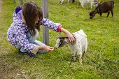 Little Girl Feeding A Goat Cub Through The Fence