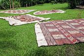 Tongan Tapas Drying On The Grass