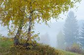 Autumn landscape with fog. Two birch trees on the slopes of a hill in the mountain village