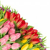 Bouquet Of Fresh Tulips Over White Background