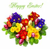 Colorful Primula Flowers With Easter Eggs Decoration