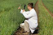 Agronomist In Onion Field
