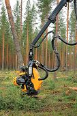Ponsse Harvester Head H6 Cuts A Pine Tree