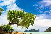 Under Trees Exotic Paradise