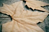 some dried leaves in autumn on a weathered wooden background