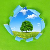 The frame of the green paper. On the background spring landscape with tree