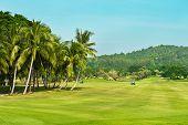 Golf Course. Palms Landscape