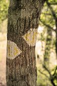 Hiking trail marking in a forest